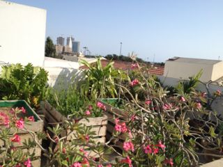 roof terrace flowers